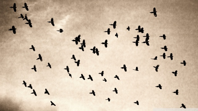 flock-wallpaper-960x540
